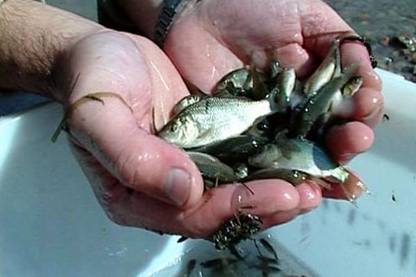 где купить живца для рыбалки в калининграде